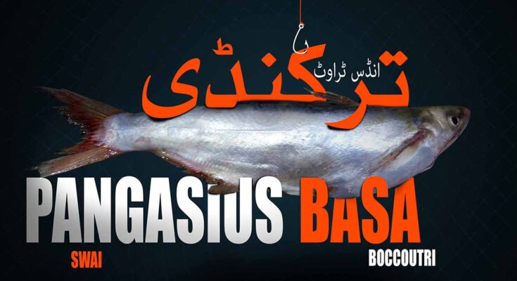 Basa Fish Healthy or not Nutrition health risk