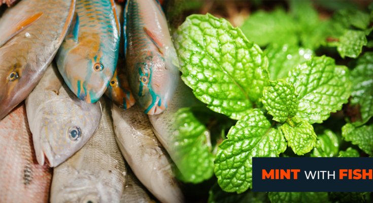 The benefits of mint with the fish recipes