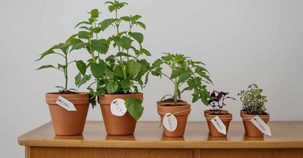 mint nursery at home