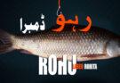 Rohu fish identity recipes and fishing